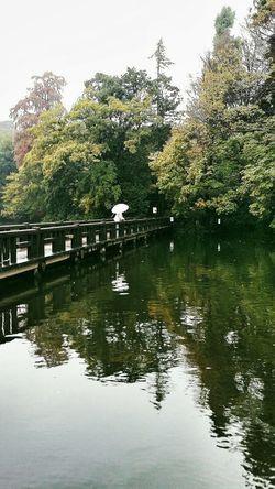Wooden Bridge Bridge Lake Inokashira Park Autumn Autumn 2015 Tokyoautumn2015 Nature Naturelover EyeEm Nature Lover Naturephotography Urbannature Tokyonature Tokyo Japan Travel Photography