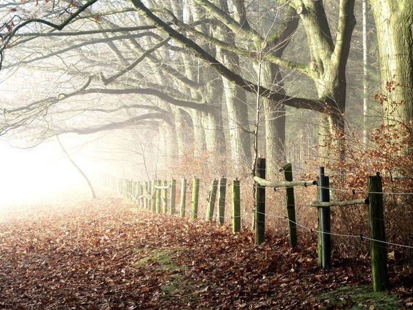 Landscape Tree Fence Picket Fence Wood - Material Tranquil Scene Fog Foggy Mist Outdoors No People Beauty In Nature Tree Trunk Animals In The Wild Cold Temperature