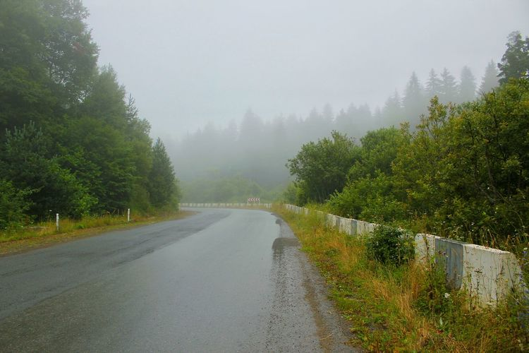Road Natureroad Tree Water Fog Forest Mountain Wet Sky Landscape Rainy Season RainDrop