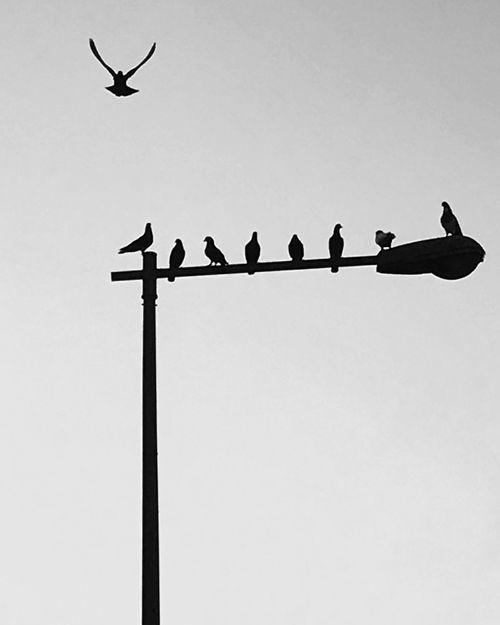Bird Animal Themes Animals In The Wild Animal Wildlife Low Angle View Perching Stork