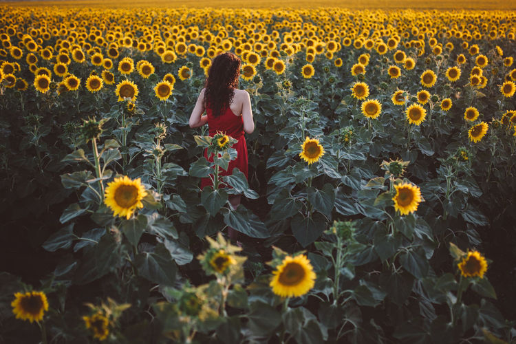 Beautiful Woman Field Flower Fragility Freshness Full Length Growth Leisure Activity Lifestyles Nature One Person One Woman Only Plant Real People Rear View Red Dress Sunflower Sunflower Sunflowers Sunflowers Field Sunflowers🌻 Sunflower🌻 Sunset Yellow Young Women The Photojournalist - 2017 EyeEm Awards The Great Outdoors - 2017 EyeEm Awards Breathing Space Lost In The Landscape Perspectives On Nature Be. Ready. An Eye For Travel Summer Exploratorium EyeEmNewHere Visual Creativity Summer Road Tripping International Women's Day 2019