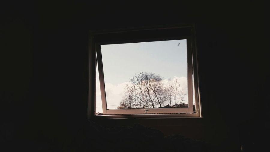 Nature Window Spring