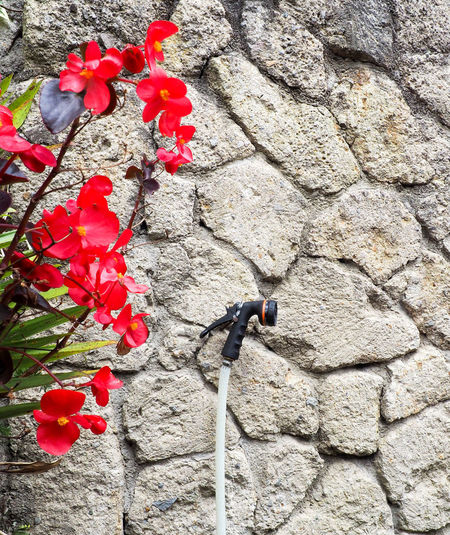 Spray hose nozzle hanging from a nail on a stone wall. Red tropical flowers appear with it. Beauty In Nature Close-up Day Flower Flower Head Flowering Plant Fragility Freshness Growth Hose Inflorescence Nature No People Outdoors Petal Plant Red Solid Spray Nozzle Stone Wall Vulnerability  Wall Wall - Building Feature