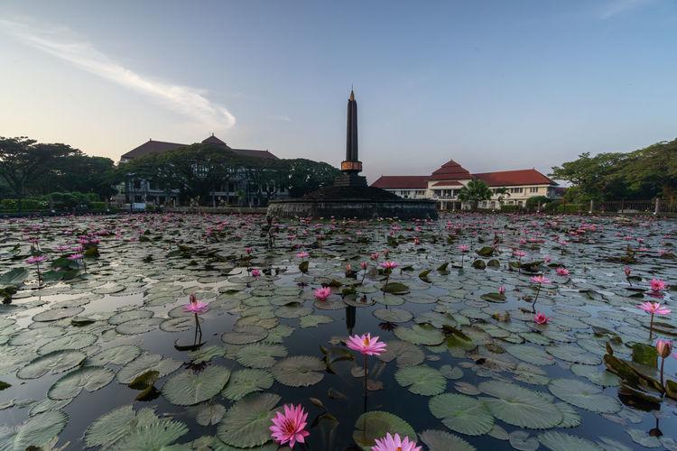 Pink lotus water lily in lake against sky