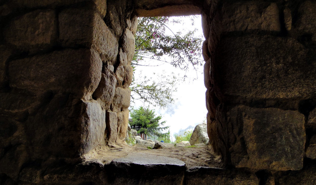 tree, no people, day, nature, indoors, plant, rock, architecture, cave, solid, rock - object, rock formation, window, hole, low angle view, built structure, history, close-up, geology