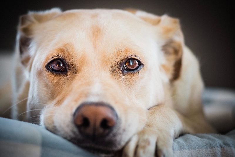 EyeEm Selects Dog Canine One Animal Mammal Animal Themes Pets Domestic Animal Domestic Animals Portrait Looking At Camera Close-up Animal Body Part Indoors  Animal Head  No People Focus On Foreground