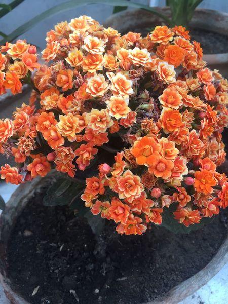 Flower Beauty In Nature Nature Flower Head Orange Color Plant 🌱