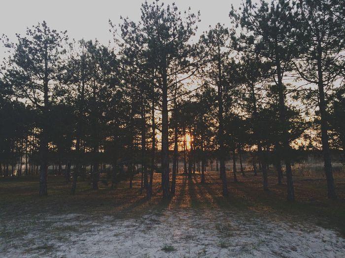 OpenEdit Vilkovo Nature Travel Sunset Firtree Landscape Forest