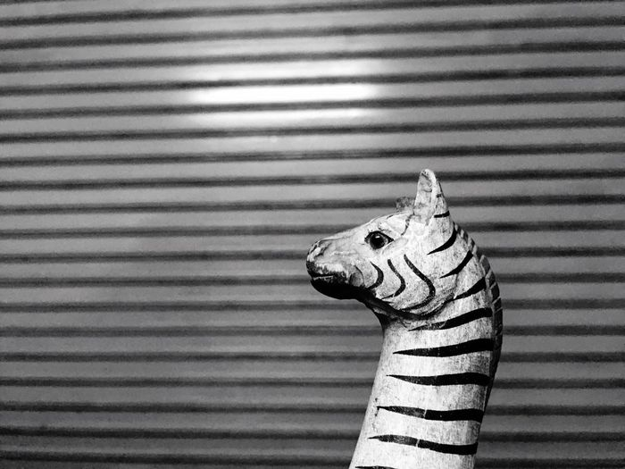 Zebra One Animal Animal Themes Close-up No People Day Indoors  Lines And Shapes LINE Lines And Patterns Adapted To The City