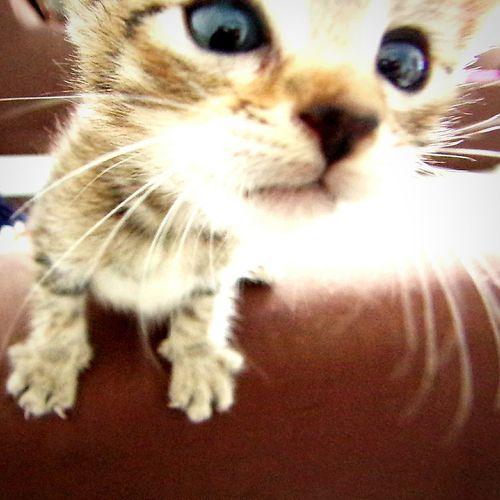 Krishna... Cats