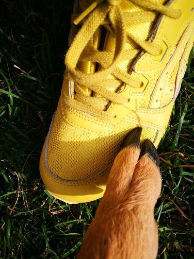 Young Roe Deer Pets Grass Animal Themes Part Human Body Hoof Foot Sneaker Asics Friends