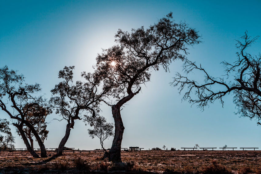 Sun shining through trees in South Australia Australia Australian Landscape Gum Trees Native South Australia Travel Clear Sky Day Flare Growth Lake Bonney Landscape Non-urban Scene Outdoors Scenics - Nature Shadows Shore Sun Tranquil Scene Travel Destinations Tree