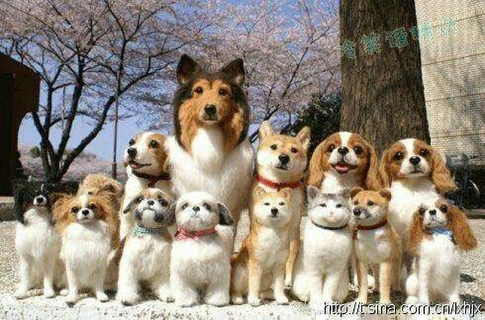 Family Dog🐩🐕🐶