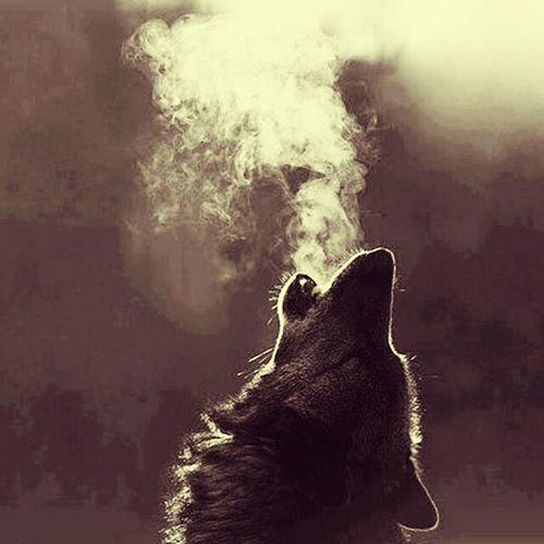 Lanzame a los lobos y me verás liderando la manada.!!