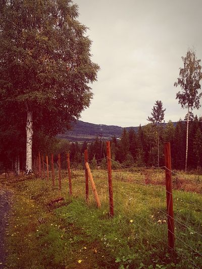 Tree Protection Sky Grass Fence Wooden Post First Eyeem Photo