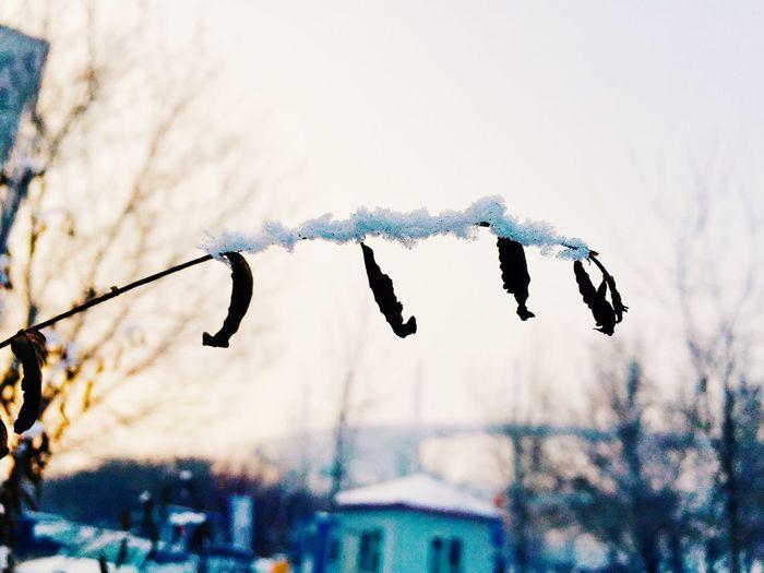 Home Snow