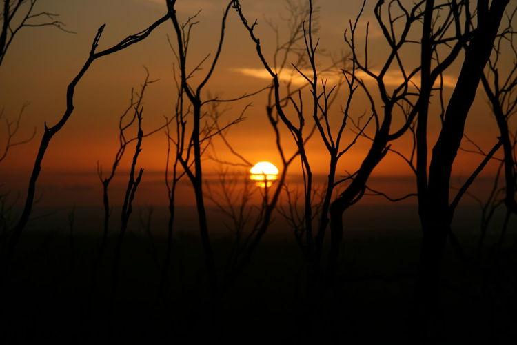 Sunset Sunset Silhouettes Orange Burnt Trees Bush Fire