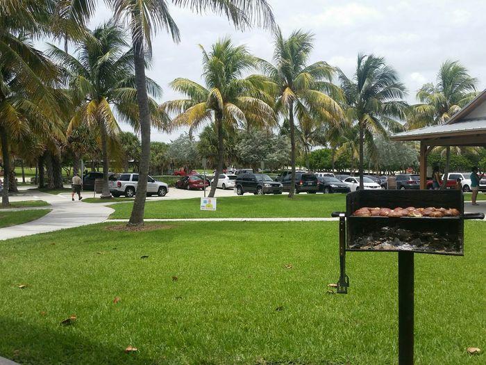 Summer Grilling Palm Trees Summer Views Gazebo Life Vacation Mode Tropical Paradise