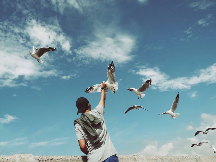 Rear View Of Man Standing Below Seagulls Flying In Blue Sky