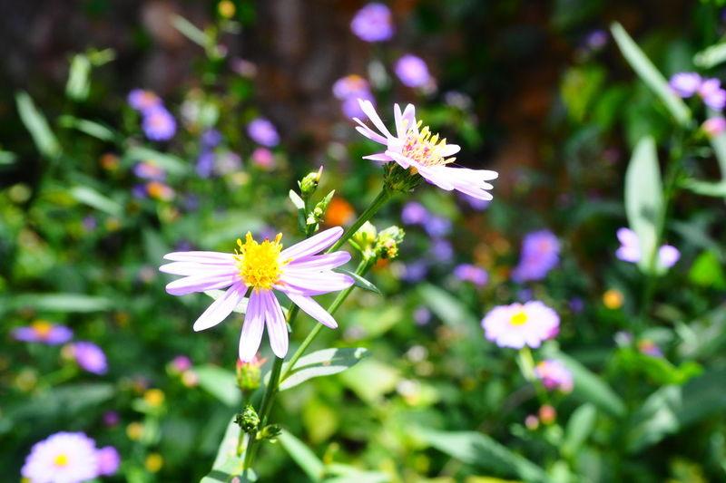 Flower Photography Emotion Flowers Omd Em10 Penang Hill Purple Flowers