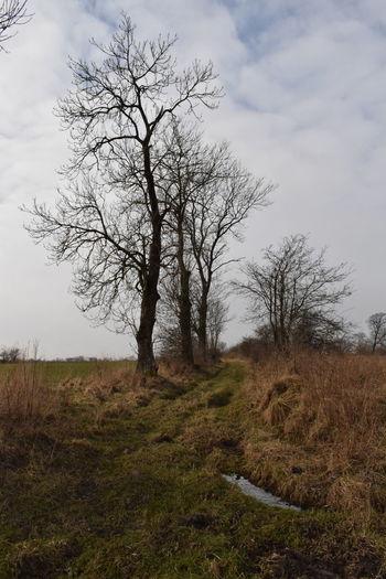 Path Bare Tree