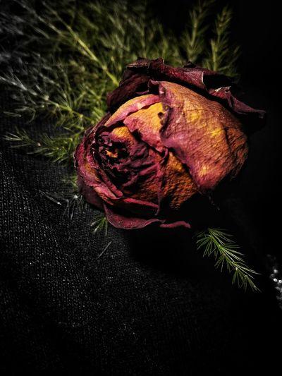 Dead Art Close-up Flower Nature Dead Plant Dead Flower Dead Rose Abstract Photography Dead Art