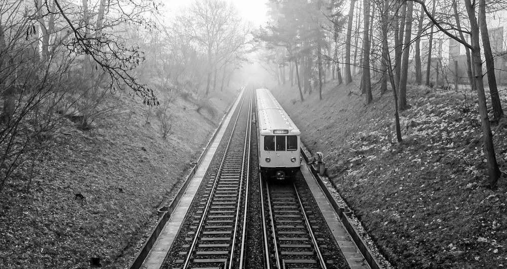 B&w Bare Tree Berlin Photography Berliner Ansichten Black And White Photography Black&white Day Dusty Fog Foggy Morning Metro Misty Nature No People Outdoors Public Transportation Rail Transportation Railroad Track Schienen The Way Forward Transportation Tree U-Bahn Urban Exploration Zehlendorf