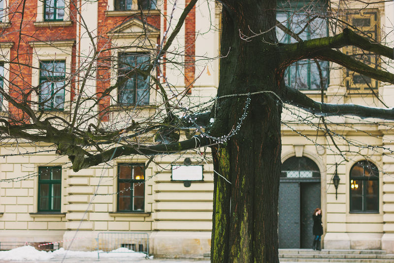 Christmas lights in an outdoor tree Branch Building Exterior Christmas Lights Krakow Tree Uniwersytet Ekonomiczny