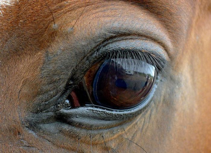 Close-up of horse eye