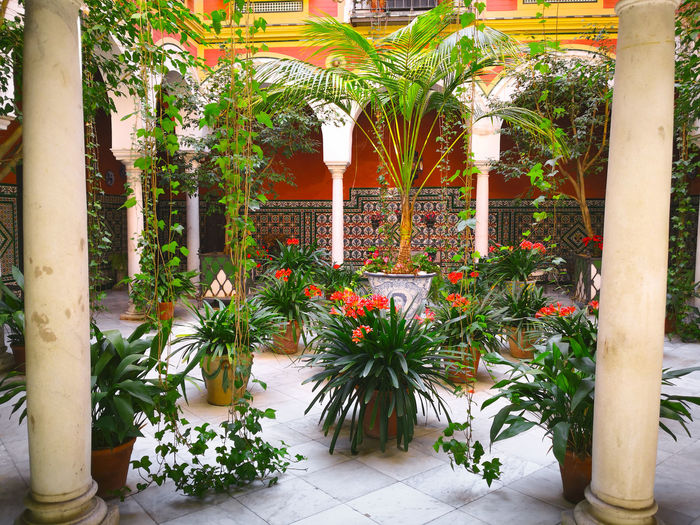 Sevilla, Spain - April 13, 2019: Traditional courtyard in a Manor Sevillian house at the famous neighborhood of Holy Cross (Barrio de Santa Cruz), Seville, Andalusia, Spain. Seville SPAIN Courtyard  Garden Europe Old Andalusia Building Architecture Tourism House Travel Historical Traditional Plants Patio Spanish Sevilla Fountain Beautiful City Wall Palace Arch Art Town Moorish Plant Arabic Santa Cruz Typical Green Decorative Decoration Outdoors Culture Landmark Historic Architectural Andalucía Design Mosaic Water