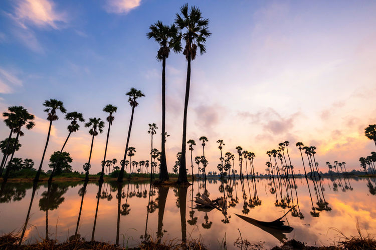 Silhouette palm trees by lake against sky during sunset