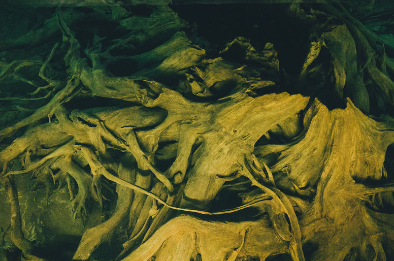 Full frame shot of tree roots