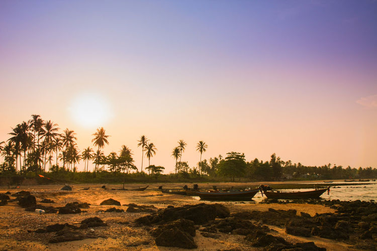 Beauty In Nature Clear Sky Environment Field Land Landscape Nature No People Outdoors Palm Tree Plant Scenics - Nature Sky Sun Sunlight Sunset Tranquil Scene Tranquility Tree Tropical Climate Water