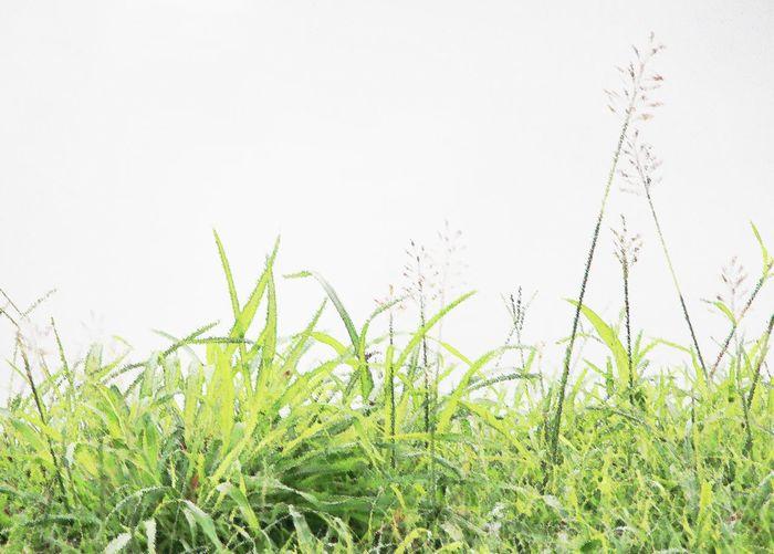 wild flower - unwanted flowers Blade Of Grass Dandelion Ear Of Wheat Cultivated Land Dew Wheat Flower Head Rye - Grain Oilseed Rape Barley Agricultural Field Rice Paddy Dandelion Seed Marram Grass Wildflower Crop  Pollen Stem In Bloom Uncultivated Damselfly Grain Cereal Plant Blooming Stamen Petal Plant Life