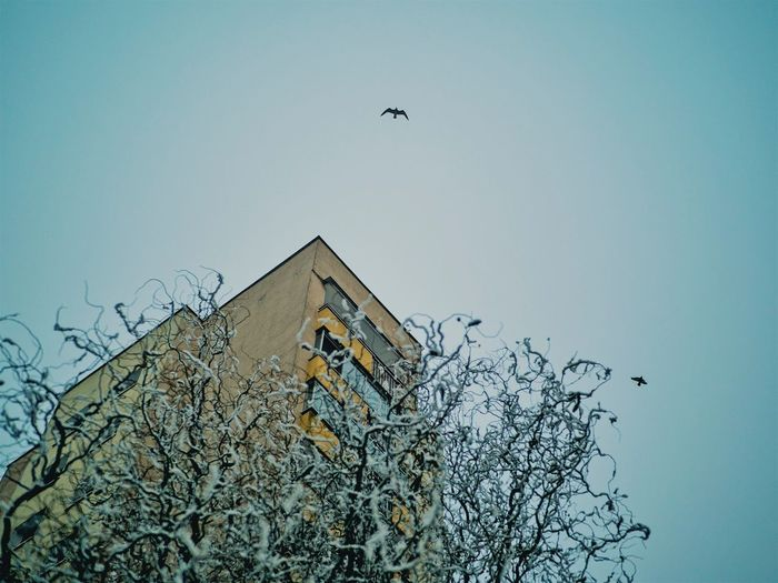 Being free #ForSale #buymyphotos #kayak Bird Animal Animal Themes Vertebrate Flying Animals In The Wild Adventures In The City Architecture Built Structure Nature Group Of Animals Day Mid-air Outdoors Wall - Building Feature Flock Of Birds Sky Building Exterior Animal Wildlife Visual Creativity
