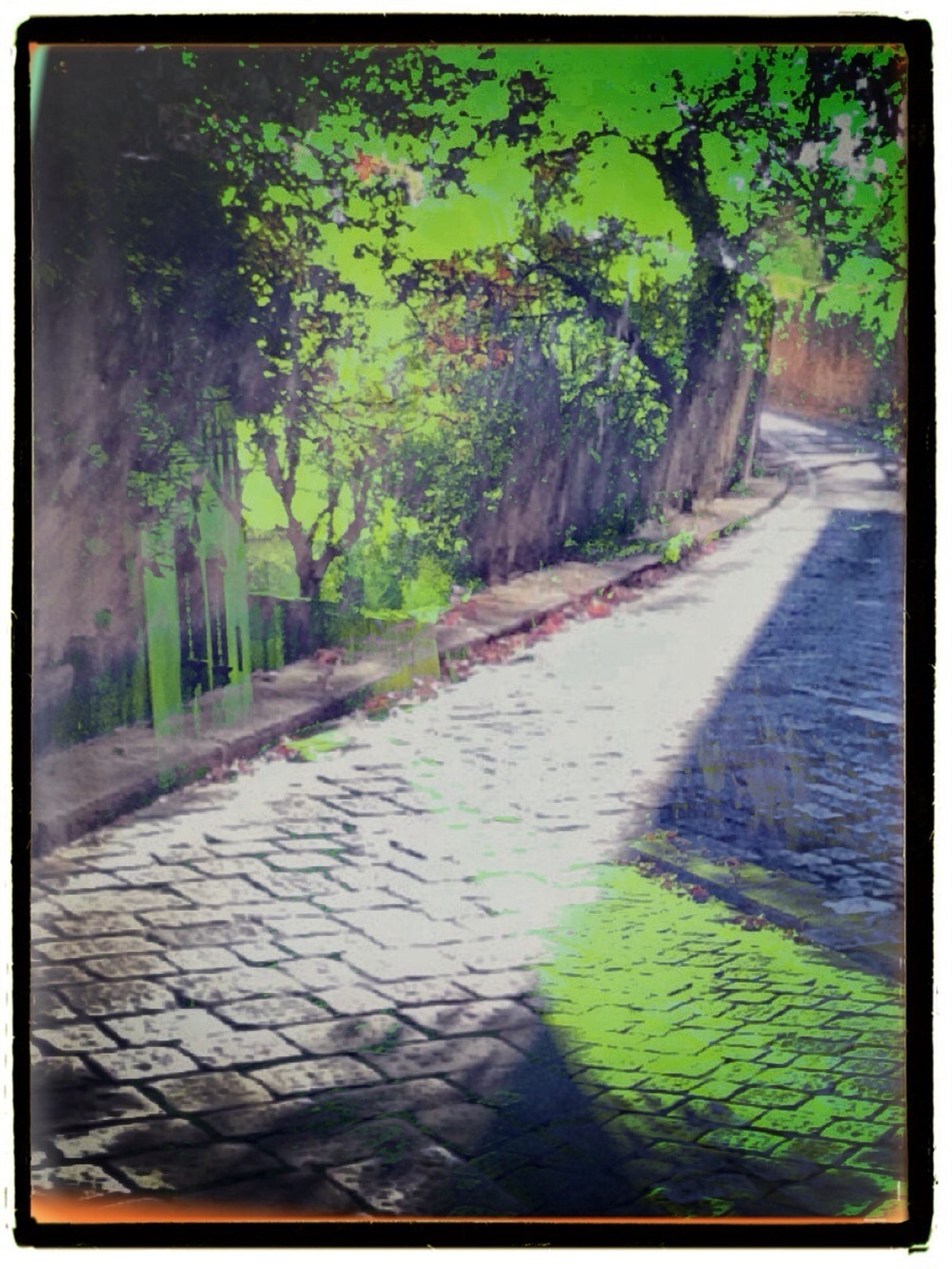 transfer print, auto post production filter, tree, footpath, the way forward, sunlight, growth, park - man made space, cobblestone, shadow, paving stone, plant, sidewalk, day, walkway, nature, outdoors, built structure, no people, green color