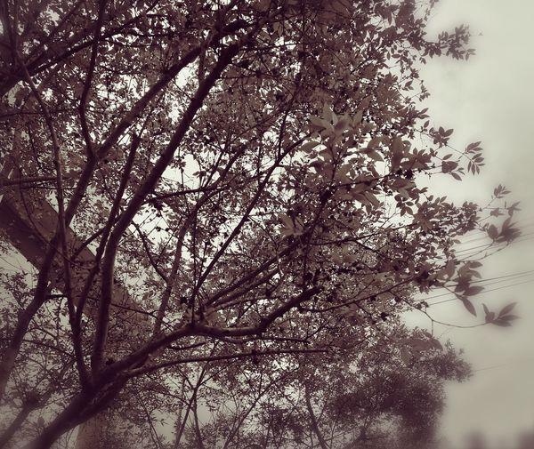 Por llover