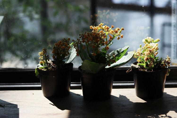 Small tree pots