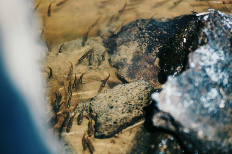 Close-up of crab on rock at beach