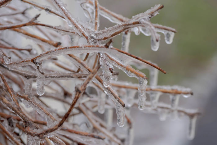 Closeup of twigs encased in ice - nature background with space for copy Copy Space Frozen Ice Nature Storm Twigs Weather Background Closeup Encased Icy Macro