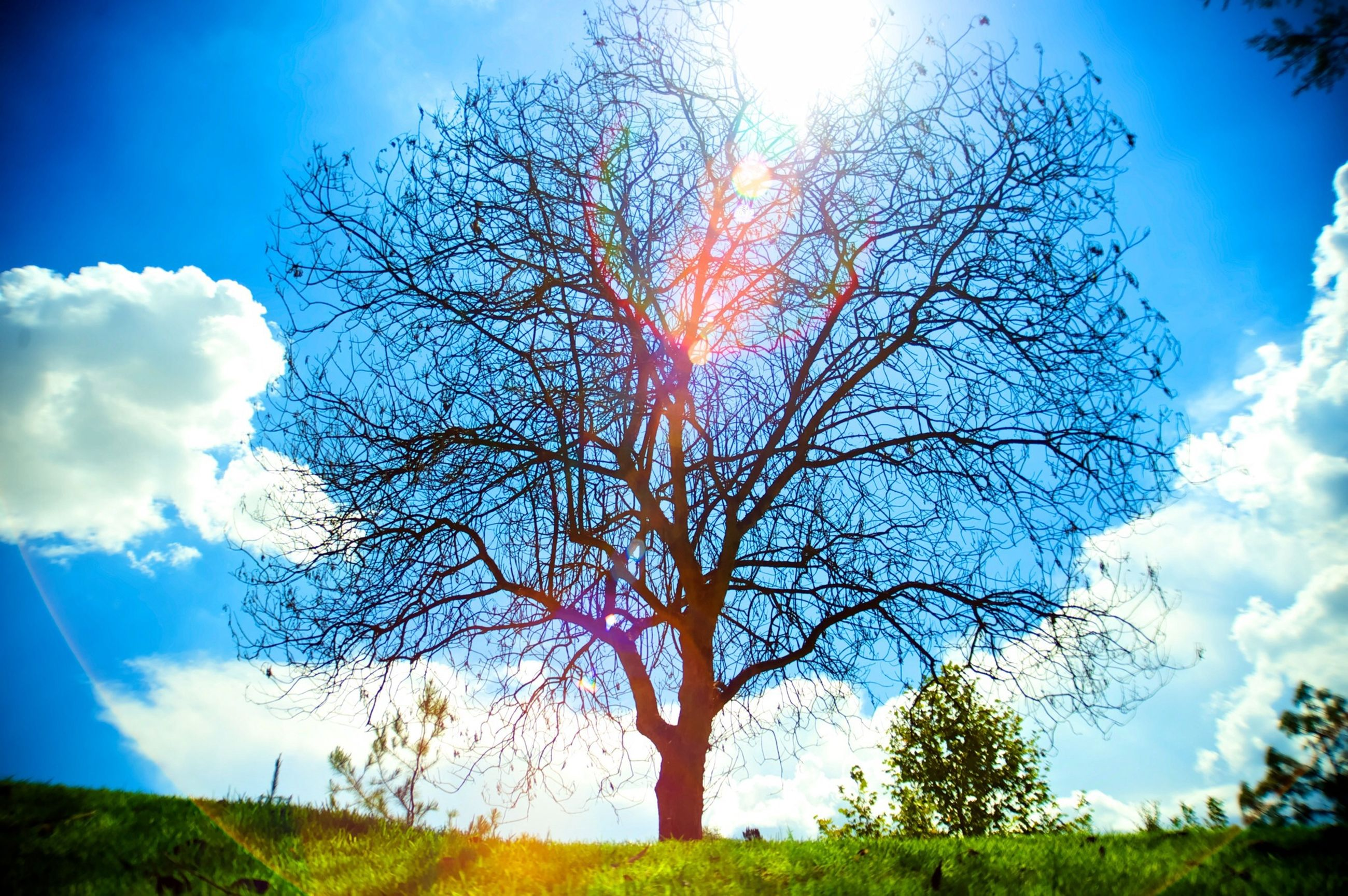 tree, sky, tranquility, tranquil scene, beauty in nature, scenics, nature, cloud - sky, sunlight, bare tree, blue, cloud, sun, sunbeam, landscape, low angle view, branch, tree trunk, growth, field