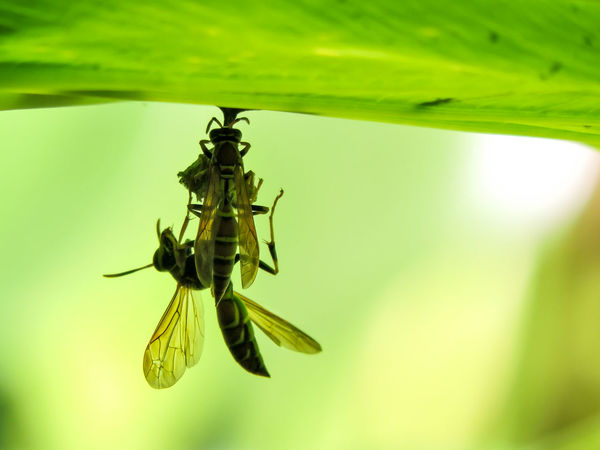 Animal Themes Animals In The Wild Beauty In Nature Close-up Day Green Color Insect Magazhu Nature No People Outdoors Paper Wasp Nest Showcase November Wasps Yelapa Yellow Color