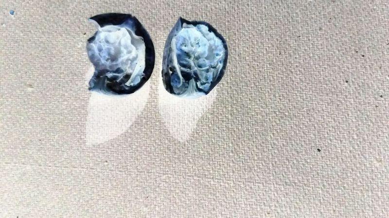 wallnut negative Negative Blanket As Background Ssclix SSClickPics SSClickpix SSClicks Like Human Lungs Pair Directly Above Shadow Close-up