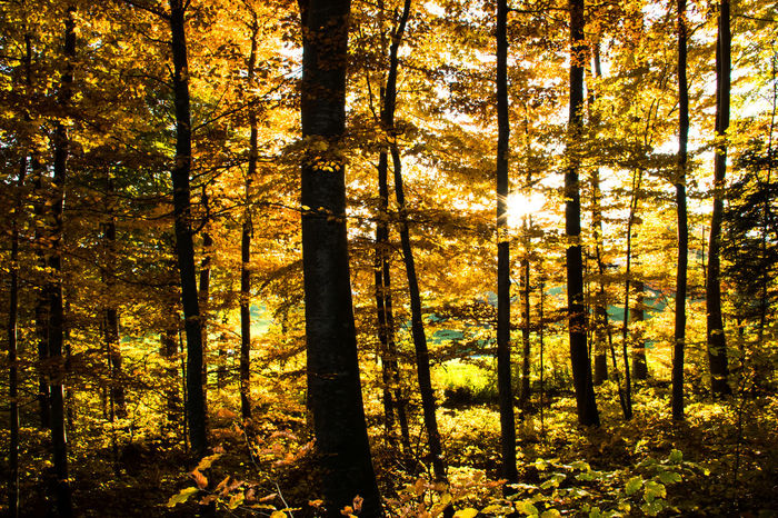 Sonnenstrahlen im herbstlichen Wald Autumn Autumn Colors Famous Place Forest Herbst Lichtblicke Light Lightview Sunbeams Trees