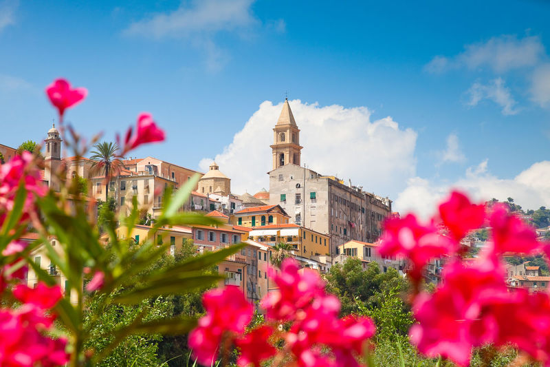 Pink flowering plants against the city of ventimiglia, italy