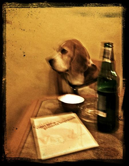 I'm a little bit Drunk, I see Dog Chilling Out drinking a Beer.
