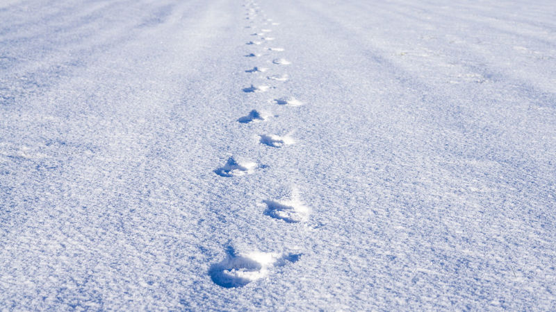 Schnee Spuren Im Schnee Winter Wintertime Backgrounds Cold Temperature FootPrint Landscape Nature No People Outdoors Snow Spuren Traces Track - Imprint Trece Weather Winter