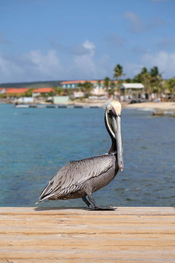 View of a bird on beach