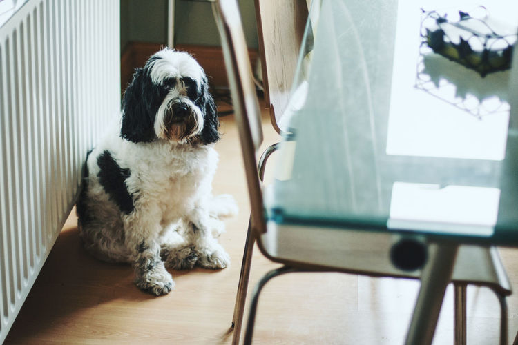 Close-up of dog sitting on table