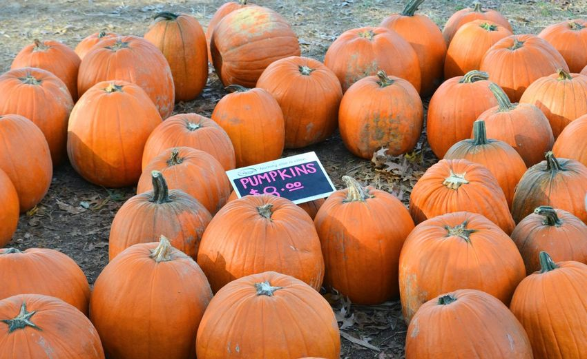 Pumpkins on sale Pumpkin Halloween Vegetable Agriculture Orange Color Farm Harvesting Autumn Food And Drink Abundance Crop  No People Food Day Choice Market Outdoors Rural Scene Squash - Vegetable Freshness
